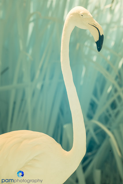 1407_PSA_zoo infrared_122-Edit