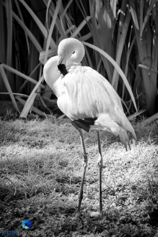 1407_PSA_zoo infrared_127-Edit