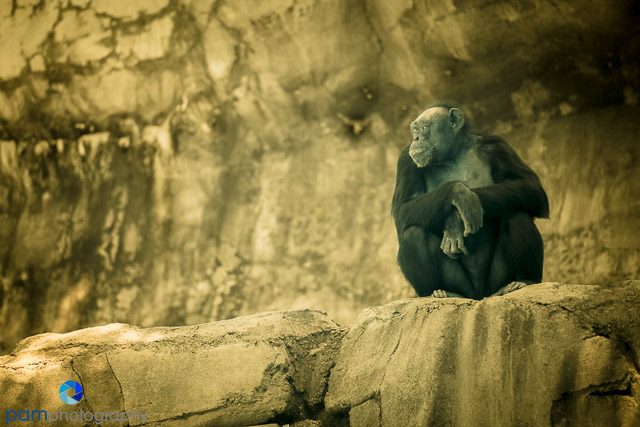 1407_PSA_zoo infrared_171-Edit