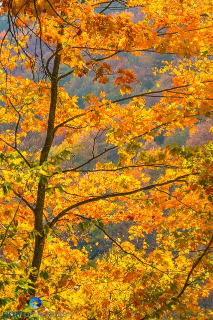 1410_MFA_Vermont_166