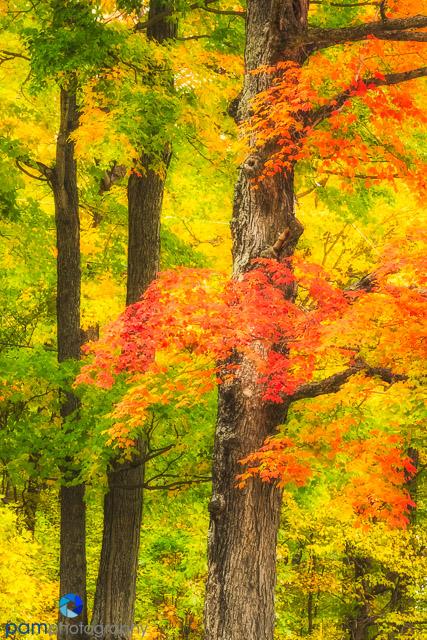 1410_MFA_Vermont_186-Edit