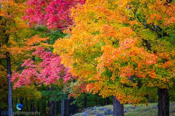 1410_PSA_Vermont_222-Edit