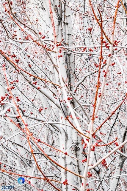Winter trees in Millennium Park