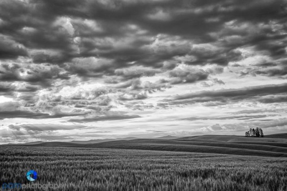 1406_PSA_Palouse_0572-Edit