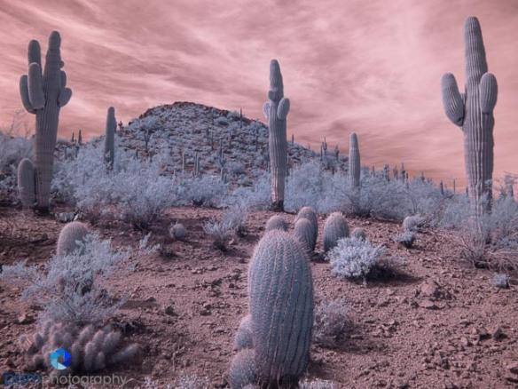 1502_PSA_Phoenix_infrared_039