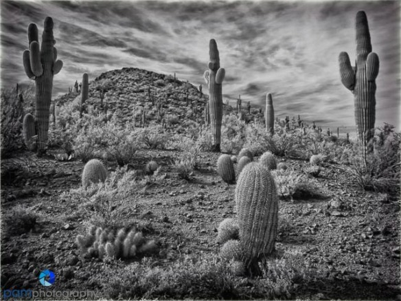 1502_PSA_Phoenix_infrared_041-Edit-Edit-2