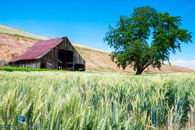 Before - Barn in Palouse Region of Washington