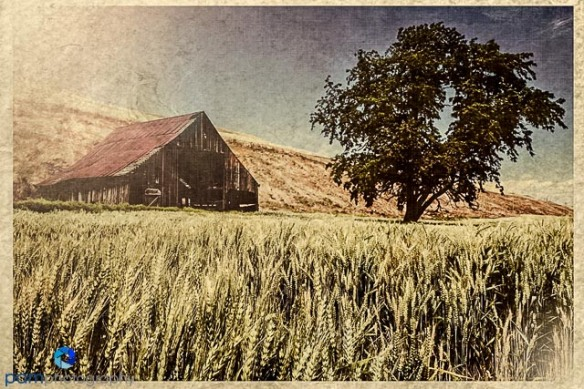 Vintage postcard of old barn in Palouse Washington