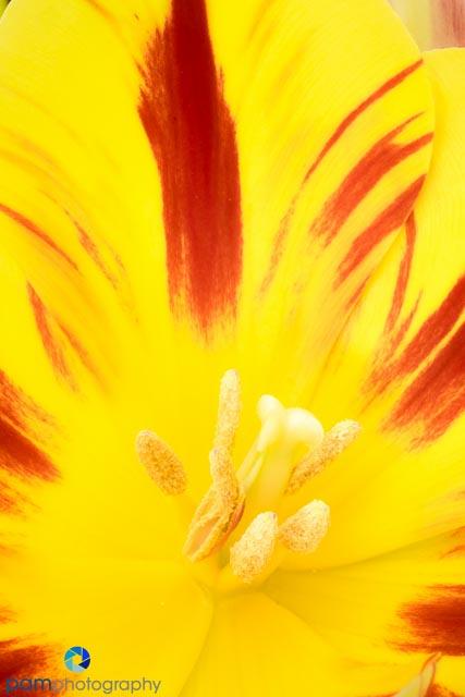 1504_MFA_Flowers_022