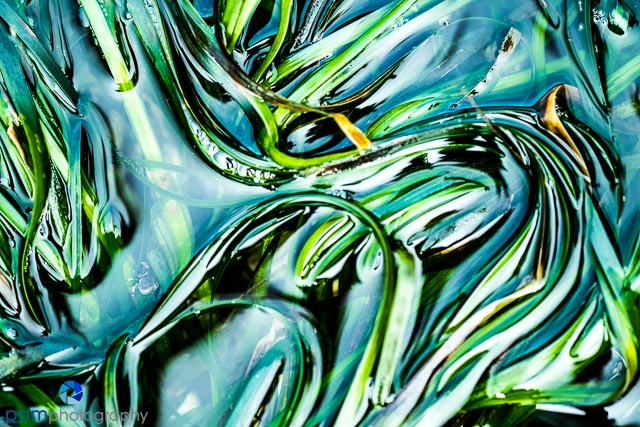 Seaweed abstract by Mary