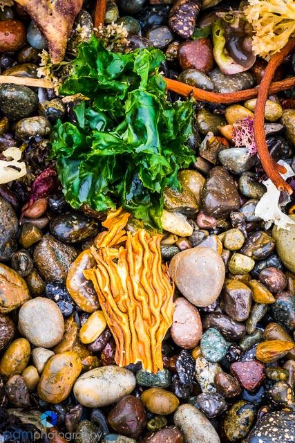 Kelp arrangement