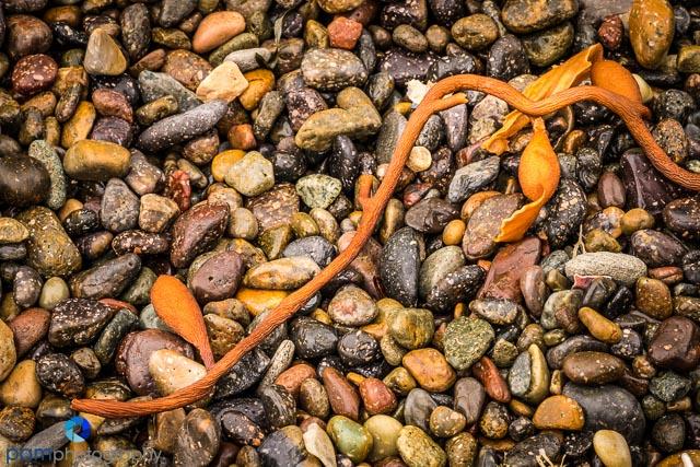 Beach pebbles with kelp
