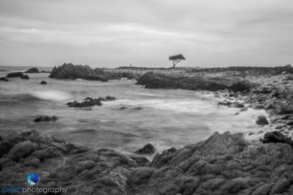Pinhole photography - cypress tree with ocean