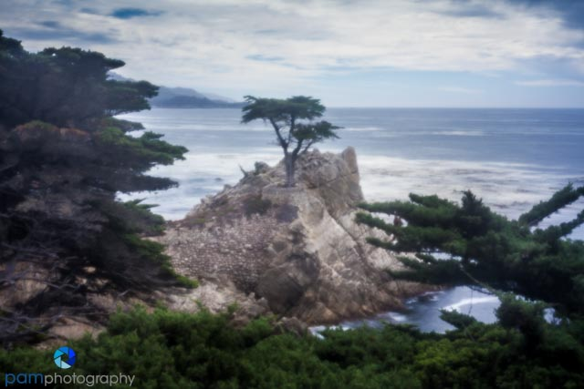 Pinhole photography - The Lone Cypress