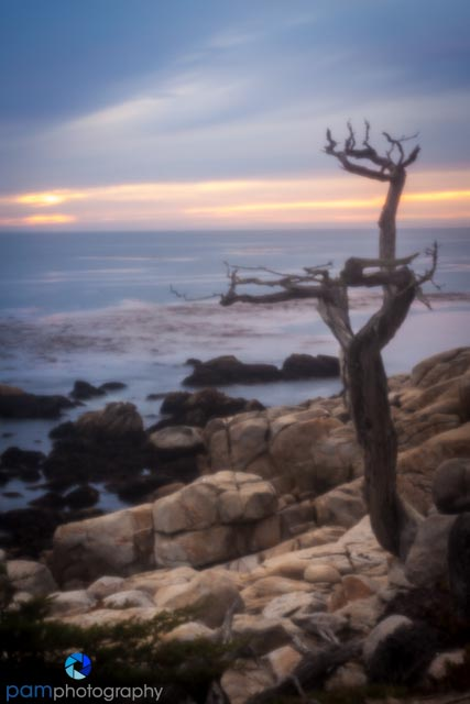 Pinhole photography - ghost tree at sunset
