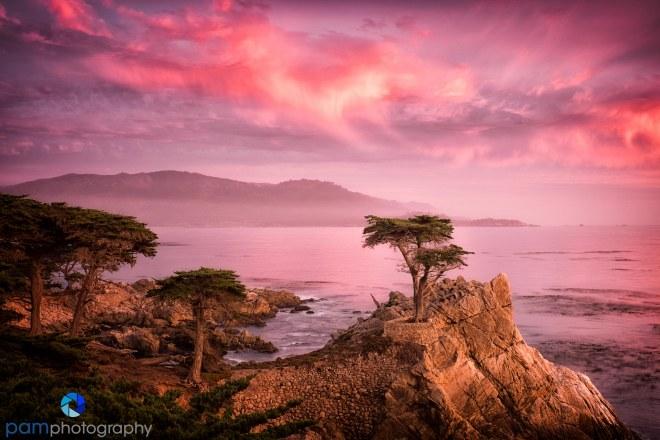Lone Cypress sunet
