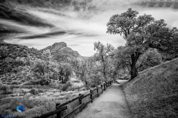 1509_PSA_Pebble_infrared_535-Edit