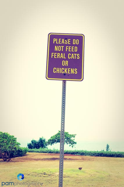 This must be why feral cats don't eat feral chickens