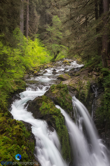 #8 Sol Duc Falls, Olympic National Park, WA