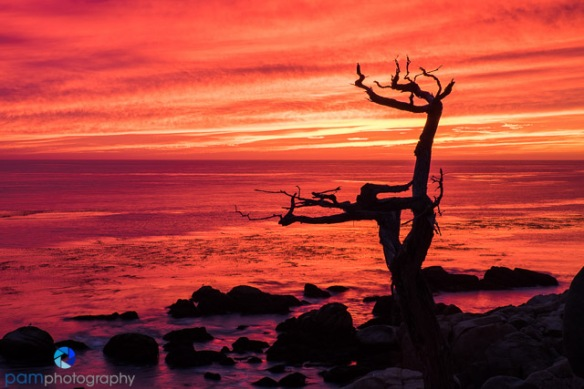 #5 Ghost Tree sunset, Monterey, CA