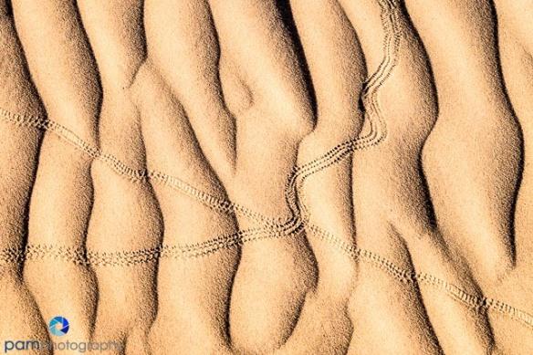 sand dunes with snake tracks