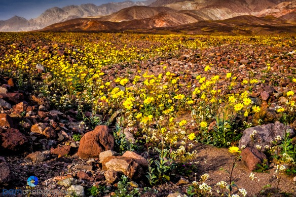 1602_MFA_Death Valley_091-Edit
