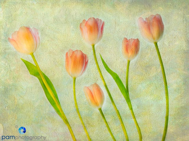 Tulips with textured background