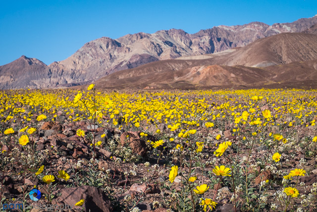 1602_PSA_Death Valley_044