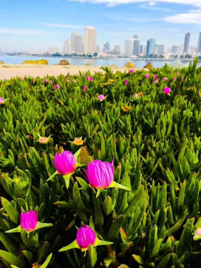 San Diego Skyline with Flowers