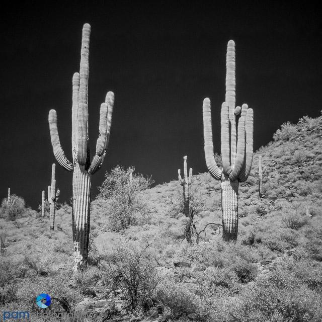 1604_PSA_Arizona_Infrared_078