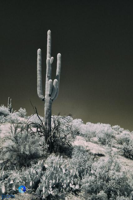 1604_PSA_Arizona_Infrared_124-Edit