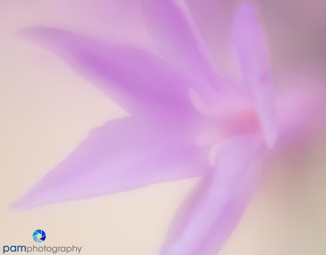 1608_MFA_lensbaby_540