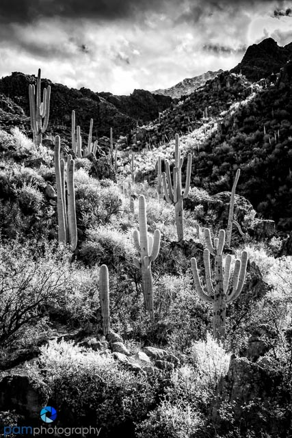 1612_mfa_tucson_infrared_010-edit