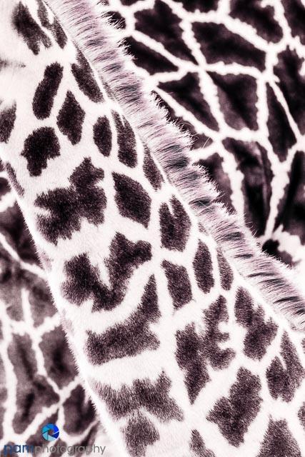 1701_mfa_zoo_197