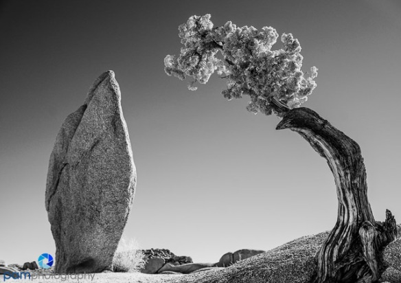 1701_mfa_joshua-tree-ir_002-edit
