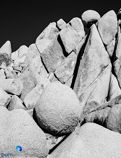 1701_mfa_joshua-tree-ir_019-edit
