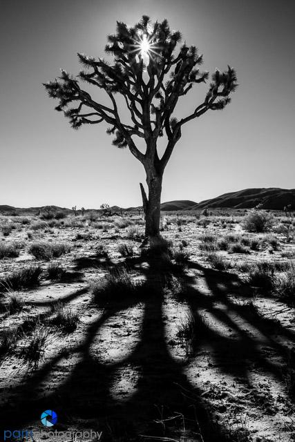 1701_mfa_joshua-tree-ir_050-edit