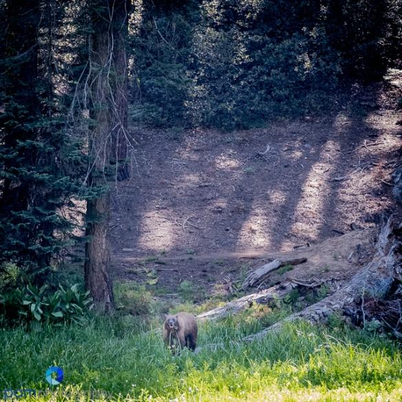 1707_MFA_Sequoia_033