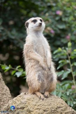 1708_MFA_Zoo_201