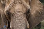 1708_MFA_Zoo_242
