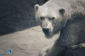 1708_MFA_Zoo_278
