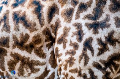 1708_PSA_Zoo_124