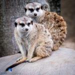 1708_PSA_Zoo_137