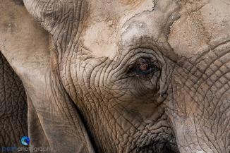 1708_PSA_Zoo_177