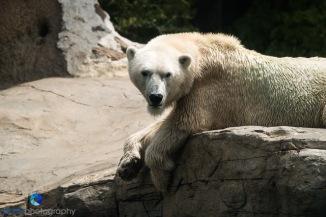 1708_PSA_Zoo_200
