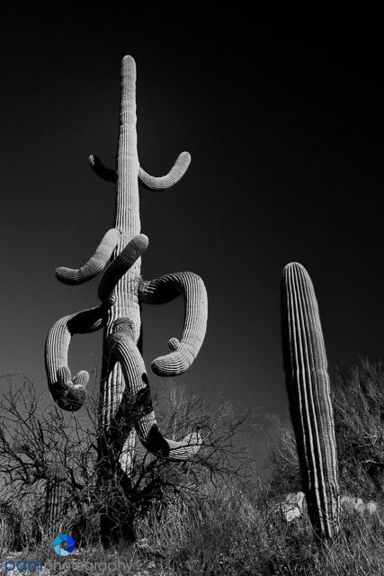 1103_PSA_Tucson_158-Edit-Edit-Edit
