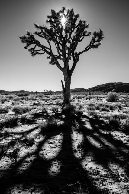 1701_MFA_Joshua Tree IR_050-Edit
