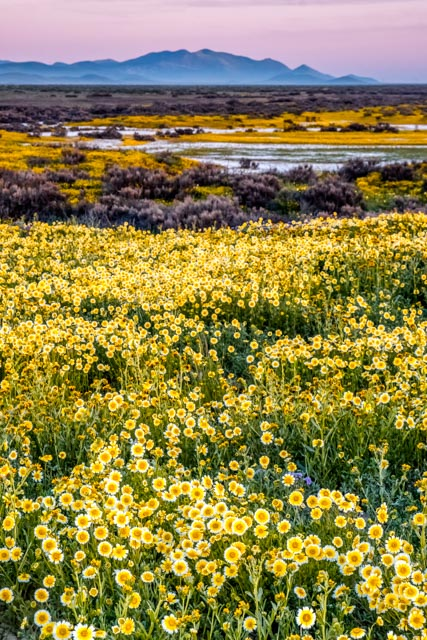 1704_MFA_SoCal Wildflowers_522-Edit