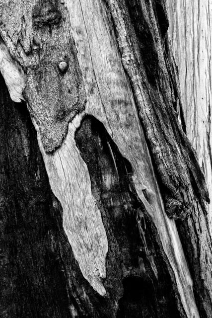 1707_MFA_Sequoia_022-Edit