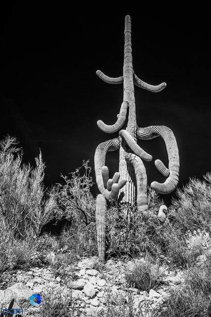 1712_PSA_Tucson _IR_130